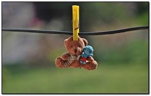 Hanging Teddy