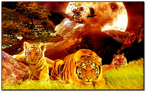 Tigers valley