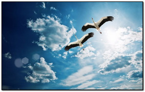 Flying Happy Bird
