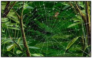Spider trên Web