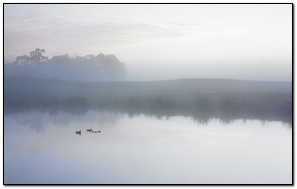 Ducks On A Misty Mac Os X Lion