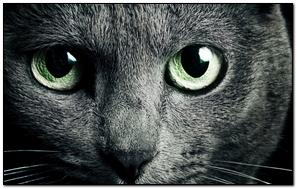 Cat Black Breed Russian Green Eyes