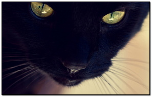 Black Cat Yellow Eyes