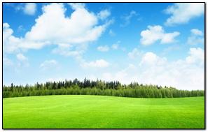 Pole trawy