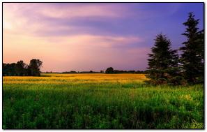 Color Flow Nature