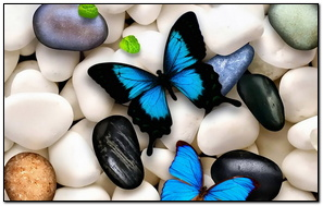 Butterflies On The Stone
