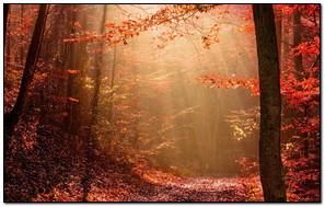Fall Down Autumn Leaves