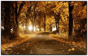 Autumn Yellow Nature