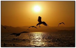 Flying Bird In Sunset