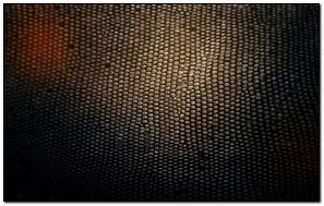 Skin Snake Texture Background Shadow