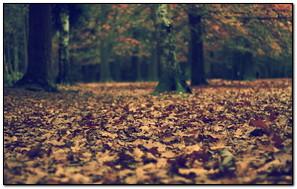 Dry Leaf On The Ground