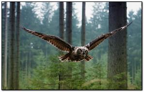 Owl Flying Forest