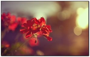 Plant Flower Red Macro
