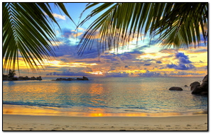 Beach Tropics Sea Sand Palm Trees
