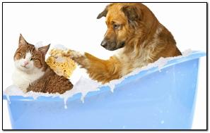 Perro bañándose con gato