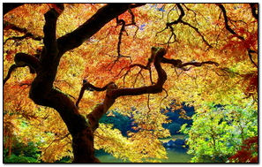 Trees Leaves Autumn Light