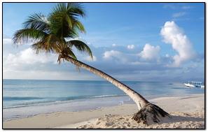 Maldives Tropical Beach Palm Tree