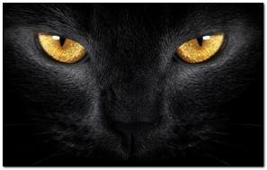 Mắt Đen Mắt Mắt Vàng