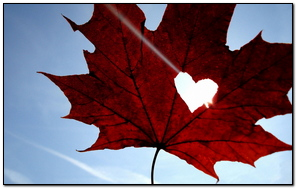 Maple Leaf Heart