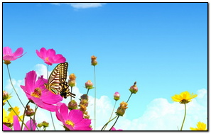 Flower Pink Yellow Butterfly