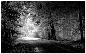 Road Autumn Black And White Trees