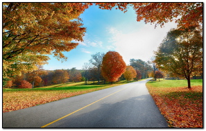 Road Markings Autumn Trees