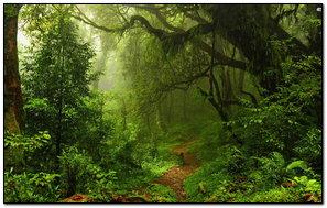 Dark Green Forest