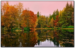 Forest Lake Reflection Autumn