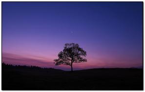 Tree Night Moon