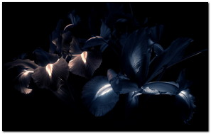 Flower Shade