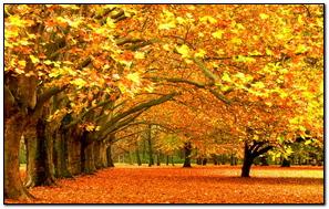 Autumn Trees Park Foliage
