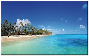Maldives Tropical Beach Palm Trees