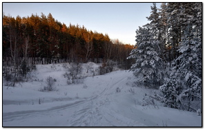 Forest Trees Snow Trail