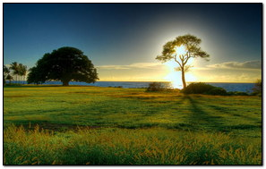 Sunny Tree