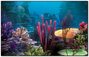 Most Beautiful Coral Reefs In The World