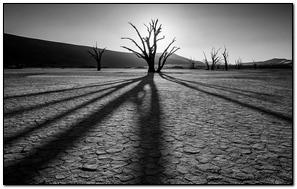 Desert Rocks Plants Drought Black And White