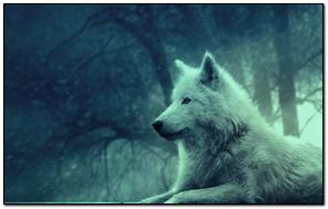 Wolf Light Forest Wild Calm Peace
