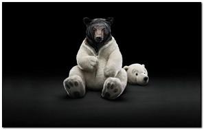 White Black Bear