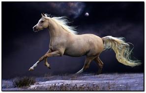 Horse Mane Running Beautiful