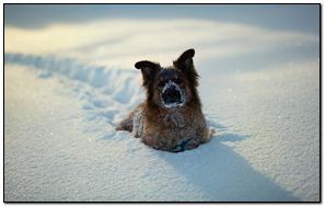 Dog Snow Snowdrift Cold