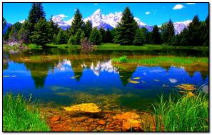 Vegetation Lake Green