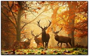 Deer Grass Leaves Autumn