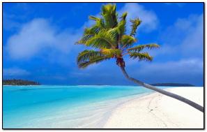 Maldives Beach Palm Trees Sand
