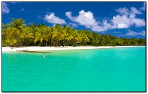 Summer Maldives Tropical Beach Palm