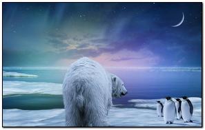 Polar Bear Penguin Northern Lights