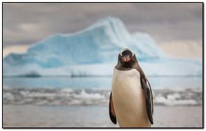Penguin Ice Ocean Animal Bird