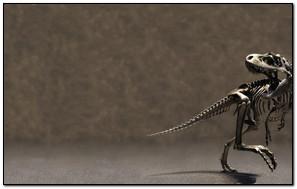 Khủng long Skeleton
