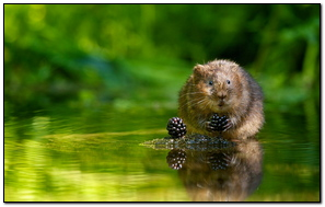 Animal Blackberry Reflection Green