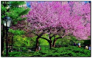 Tree Park City Flowers