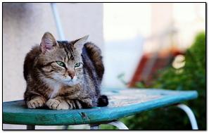 Cat Sitting Striped